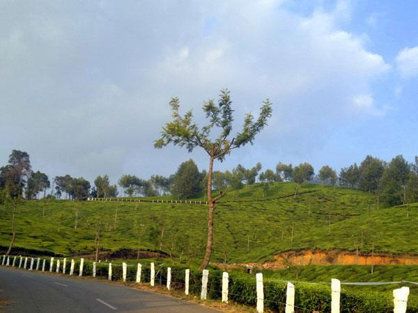 Thralling Places To Visit In Kannan Devan Hills, Things to do and how to reach