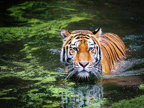 Wildlife Sanctuaries To Visit In India During Winter