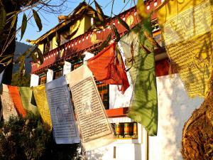 Top Five Buddhist Monasteries India