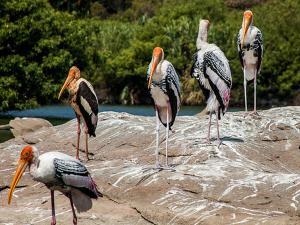 Weekend Getaways Ranganathittu Bird Sanctuary Near Mysore 000439 Pg