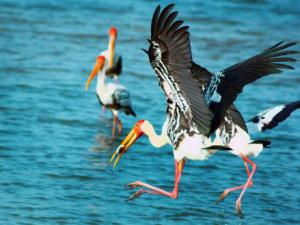 Pulicat Lake Protecting The Environment