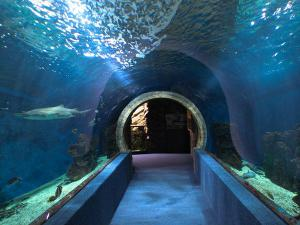 Indias Largest Under Ground Aquarium