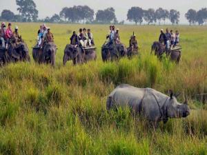 Famous National Parks Assam