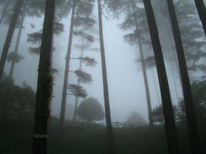 Best Sightseeing Places Dhanaulti Uttarakhand