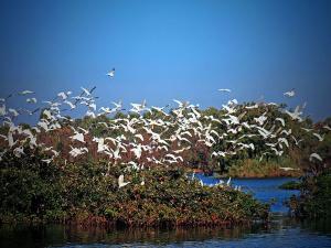 Nelapattu Bird Sanctuary Nellore