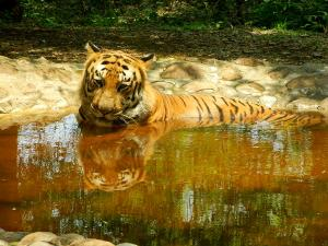 A Day S Outing Bannerghatta National Park