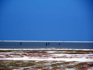 Travel Guide Dhanushkodi The Untarnished Beach