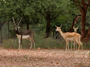 Vanasthalipuram National Park Hyderabad
