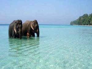 Best Places Visit Andaman Nicobar Islands