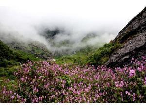 Valley Flowers Uttarakhand