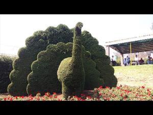 New Garden In Ooty