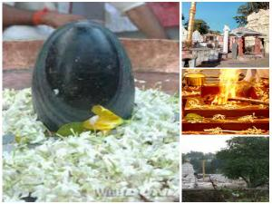 Here Comes The Scent Of Rotten Meat From Shivalingam But It Is A Pilgrimage