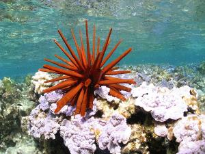 Top Marine National Parks India