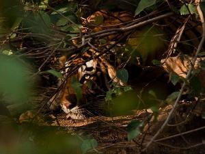 Wildlife Sanctuary Safari Entry Fee Timings How Reach