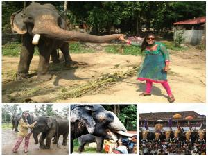Guruvayur Elephant Camp Sanctuary Punnathurkotta Timing