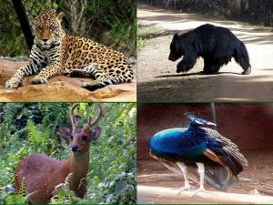 Sri Venkateswara National Park In Tirupati Attractions Timings How To Reach