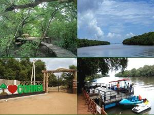Coringa Wildlife Sanctuary Travel Guide Attractions Things To Do How To Reach