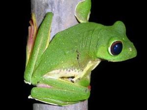 Wildlife Sanctuaries Goa