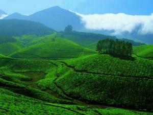 Munnar Paradise Nature Lovers