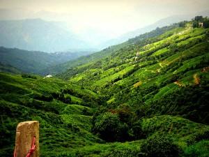 Four Best Tea Plantation States India