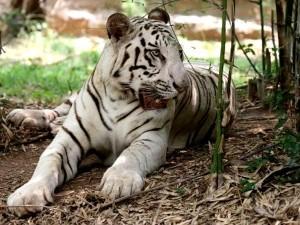 Wildlife Sanctuaries Karnataka