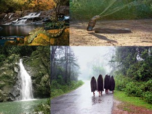 Agumbe The Land Waterfalls Forests
