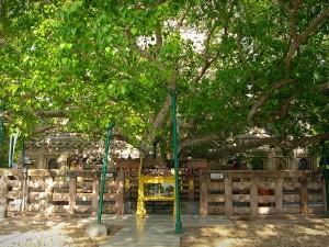 Place Visit Bodhgaya Bihar