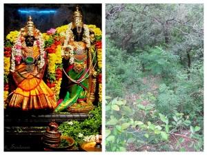 Some Unbelievable Facts About Tirumala