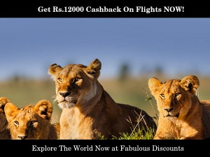Book Now Save More Amazing Offers And Cashbacks
