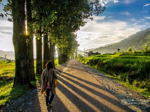 Places To Visit Near Chali In Himachal Pradesh