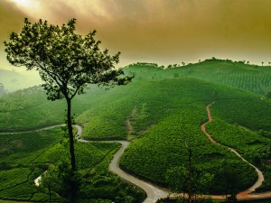 Places Visit Near Peermade In Kerala