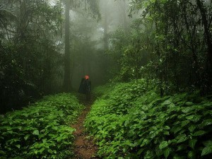 Agumbe Is The Land Waterfalls Forests