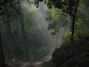 Jim Corbett National Park India S Oldest Most Prestigious National Park