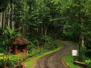 Must Visit Places Agumbe Karnataka