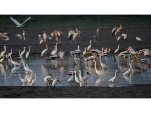 Kolleru Bird Sanctuary Andhra Pradesh