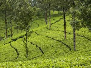 Places Visit Munnar