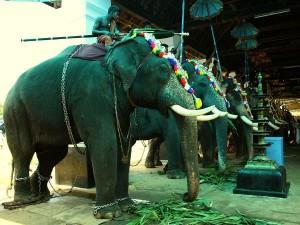 Visit The Famous Koodalmanikyam Temple Kerala