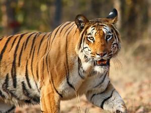 A Journey Nagzira Tiger Reserve Maharashtra