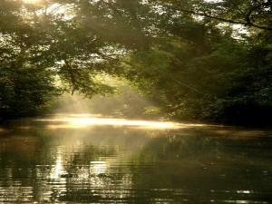Sundarbans West Bengal