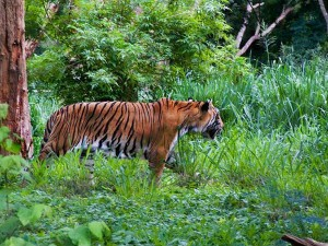 Sri Chamarajendra Zoological Gardens Mysore