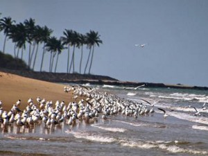 Liste Of Beaches In Karnataka State