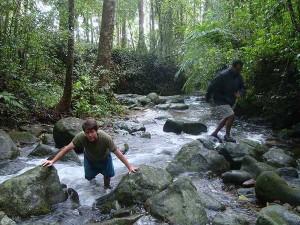A Trek At Galibeedu Near Madikeri