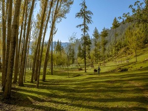Did You Visit Lolab Valley Kashmir