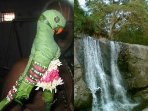 Shenbagathoppu Meenvetti Parai Waterfall Virudhunagar Tami
