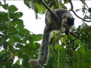 Best Wildlife Destinations Karnataka