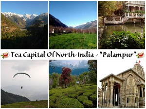 Get To Know Palampur The Tea Capital Of North India