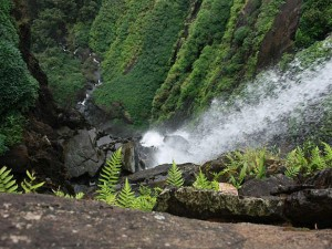 A Winter Trip From Bangalore To Agumbe Attractions Things To Do How To Reach