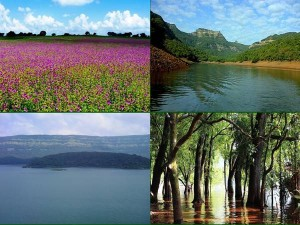 Tapola Shivsagar Lake Tourist Attraction In Mahabaleshwar Things To Do How To Reach