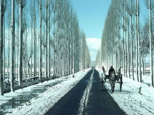 Gulmarg Jammu And Kashmir Travel Guide Attractions Things To Do How To Reach
