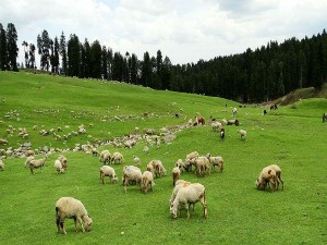 Top Most Places To Visit In The Budgam District Of Jammu Kashmir Attractions How To Reach